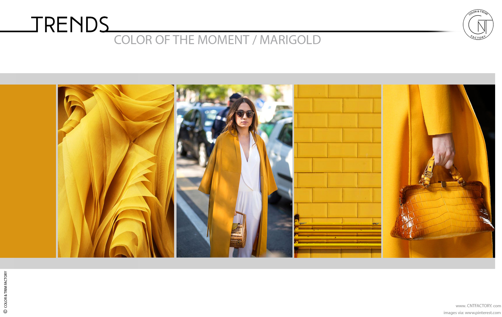 Trends Color Moment Marigold color trim design