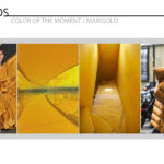 Trends - Color of the Moment / MARIGOLD