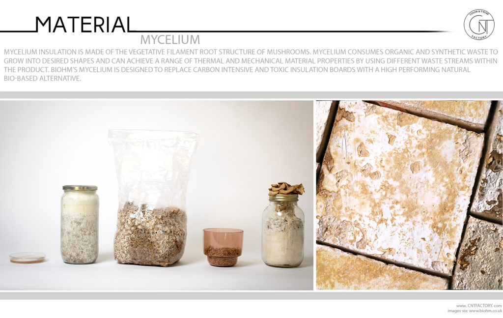 Mycelium Mushrooms Root Structure Consumes Organic Synthetic Waste