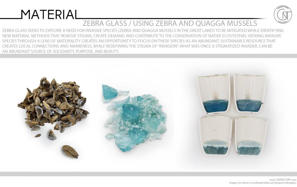 Zebra Glass Using Zebra And Quagga Mussels